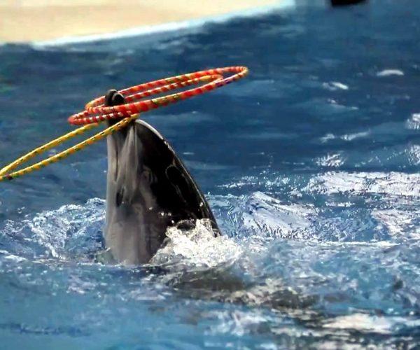sochi-delfinarii-poplavat-s-delfinami
